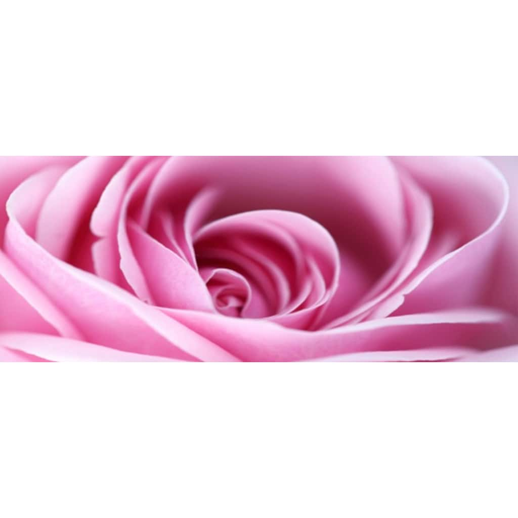 Home affaire Leinwandbild »Pink Rose«, 160/55 cm
