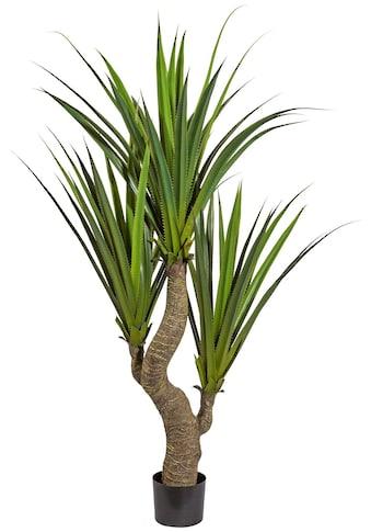 Creativ green Kunstpflanze »Agave« kaufen
