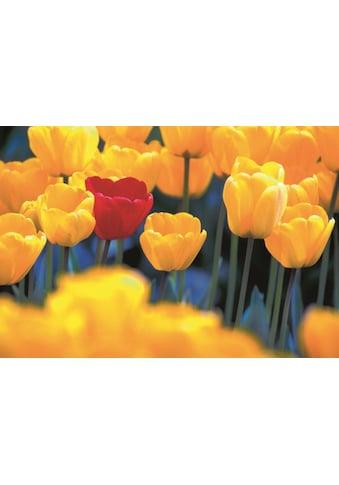 Home affaire Leinwandbild »Rote Tulpe«, 118/78 cm kaufen
