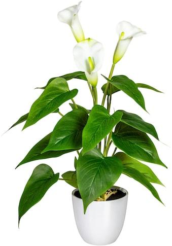 DELAVITA Künstliche Zimmerpflanze »Lesum« kaufen