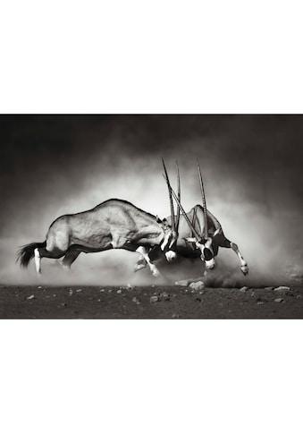 Wall-Art Vliestapete »Das Duell« kaufen