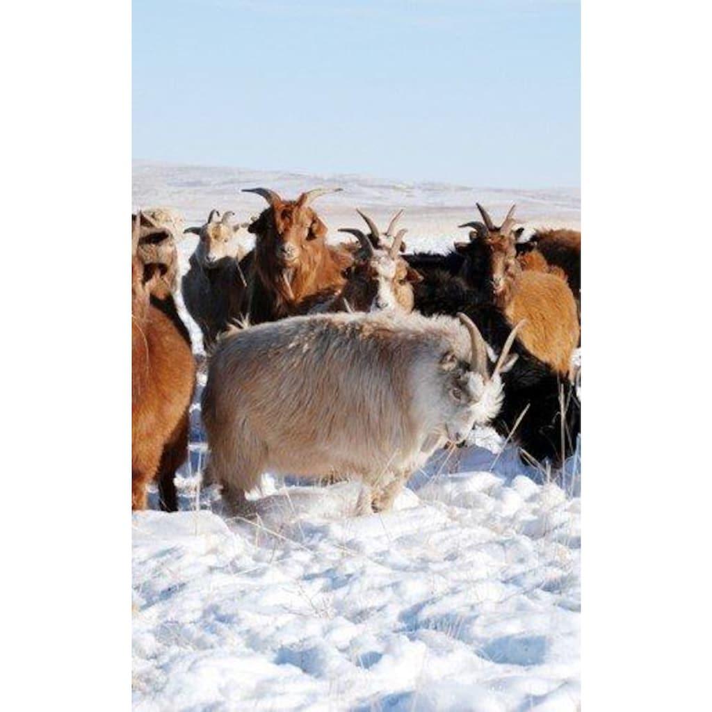 Hefel Naturhaarbettdecke »CASHMERE ROYAL«, Füllung 100% Hefel-Cashmere, Bezug Baumwoll-Edelsatin, (1 St.), 100% Naturprodukt