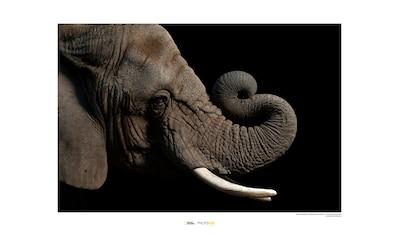 KOMAR Wanddekoration »African Elephant« kaufen