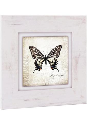 Home affaire Holzbild »Brauner Schmetterling«, 40/40 cm kaufen