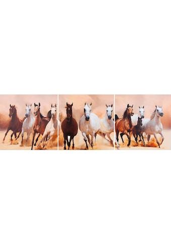 my home Kunstdruck »Pferde«, (Set, 3 St.) kaufen
