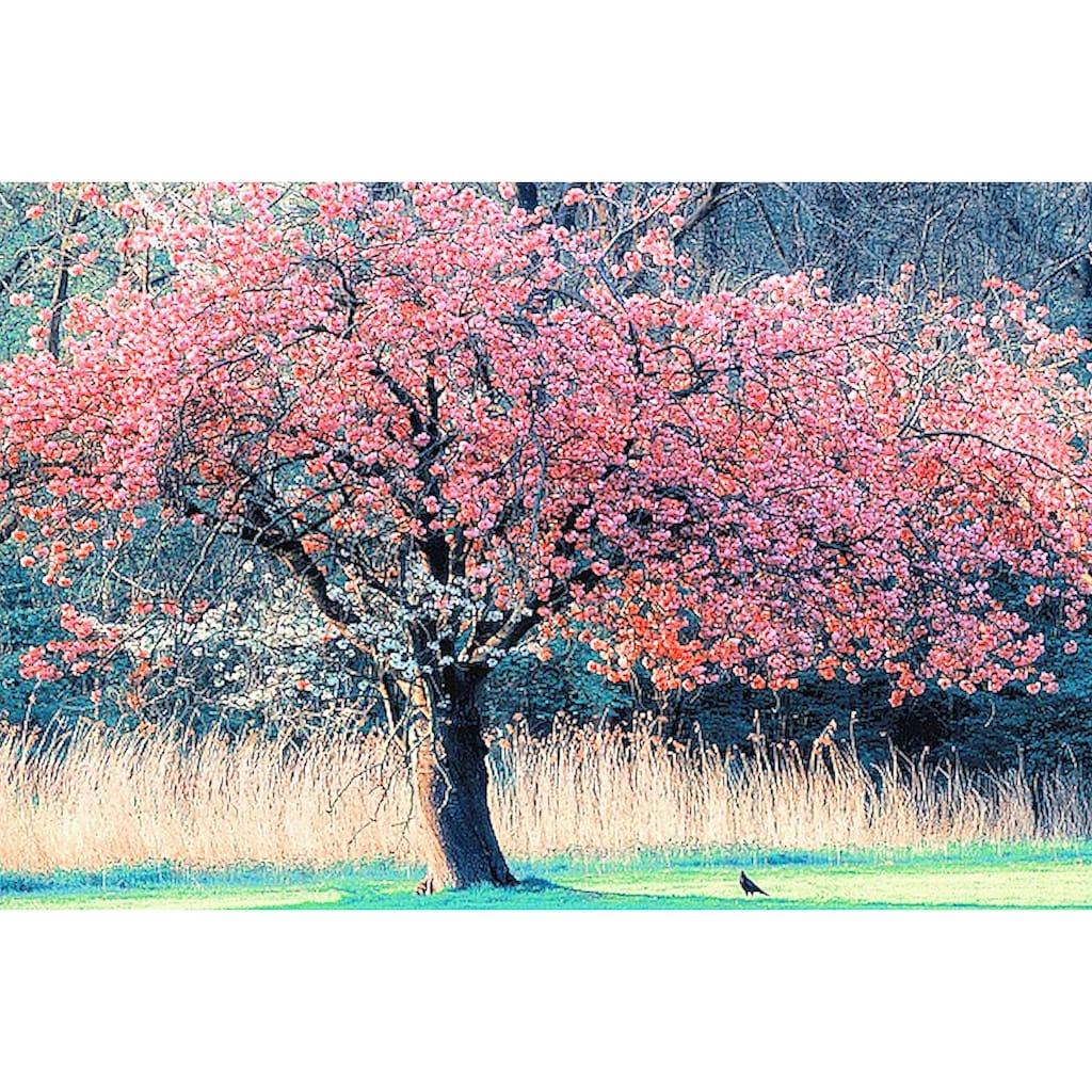 Home affaire Leinwandbild »L. VAN DE GOORS / Ich und mein Baum«, (1 St.)