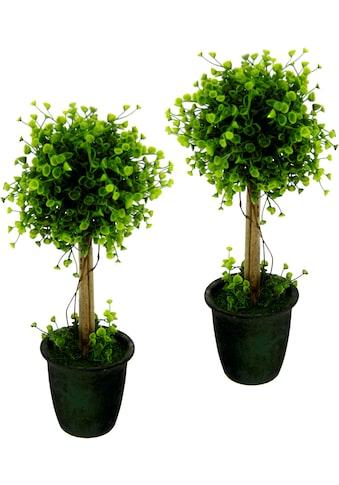I.GE.A. Kunstbaum »Buchskugelbaum« (2 Stück) kaufen